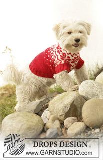 modele tricot chien