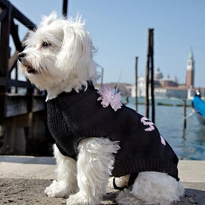 Manteau pour chien tous les manteaux pour chien - Animalerie a paris chien ...